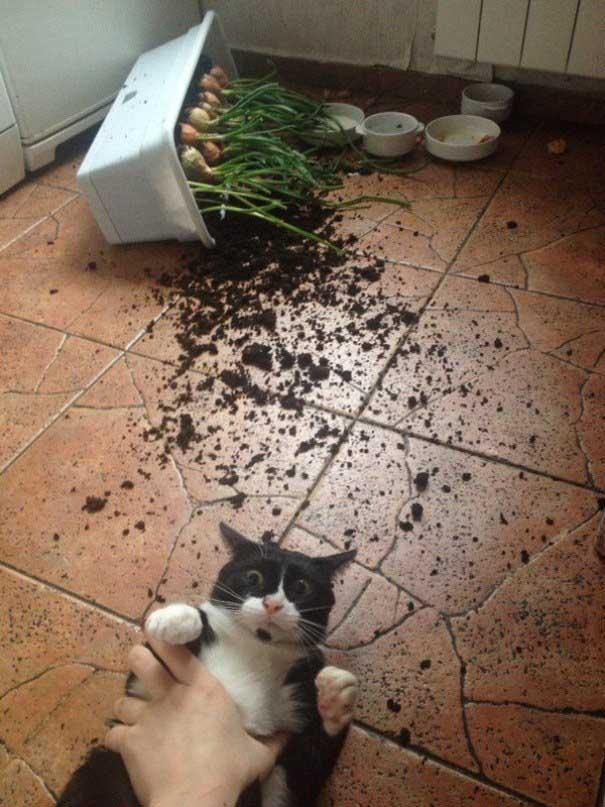 حيوانات مشاغبة ,قطط مشاغبة