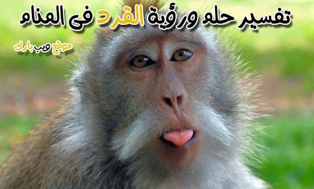 القرد فى المنام وتفسير حلم القرد بالمنام بالتفصيل
