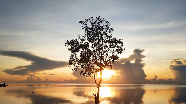 Lonely tree, lake, sunset.  Wallpaper clouds, reflection