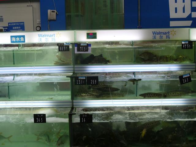 Peixes vivos em supermercado chinês