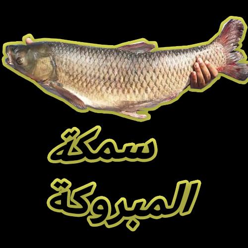 صيد سمكة المبروكة بالبلح