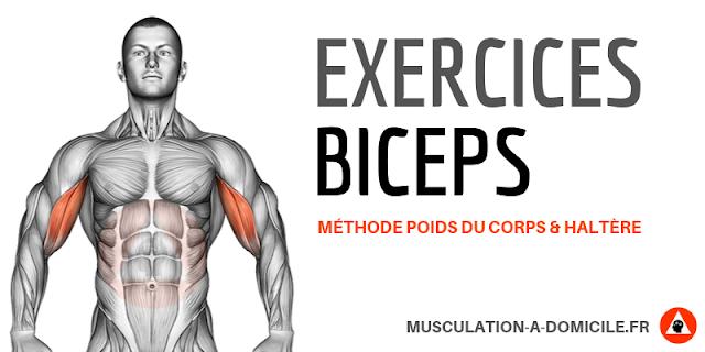 musculation à domicile exercice musculation biceps à poids de corps et haltére curl biceps