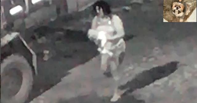 Imagens mostram furto de cadelinha da raça Shih-tzu e dona pede ajuda