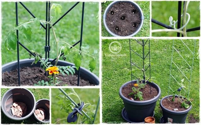 Gartenblog Topfgartenwelt Produkttest EMSA My City Garden: die Rankgitter passen perfekt in die Töpfe - sie sind schmal genug und fallen nicht um