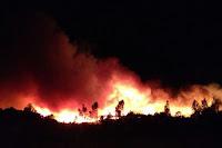Los fuegos forestales son temibles