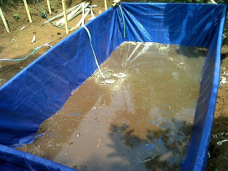 biaya ternak lele kolam terpal