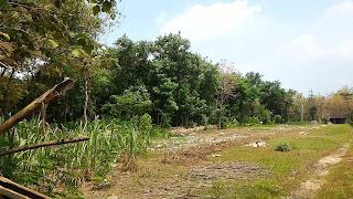 tanah dijual murah pajangan bantul, tanah murah pajangan bantul, tanah murah dijual pajangan bantul, tanah dijual murah bantul pajangan, tanah pajangan murah bantul