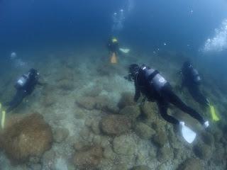 2021年7月13日の柏島ダイビング