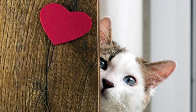 7 Hal Gokil yang Selalu Dilakukan Oleh Pecinta Kucing