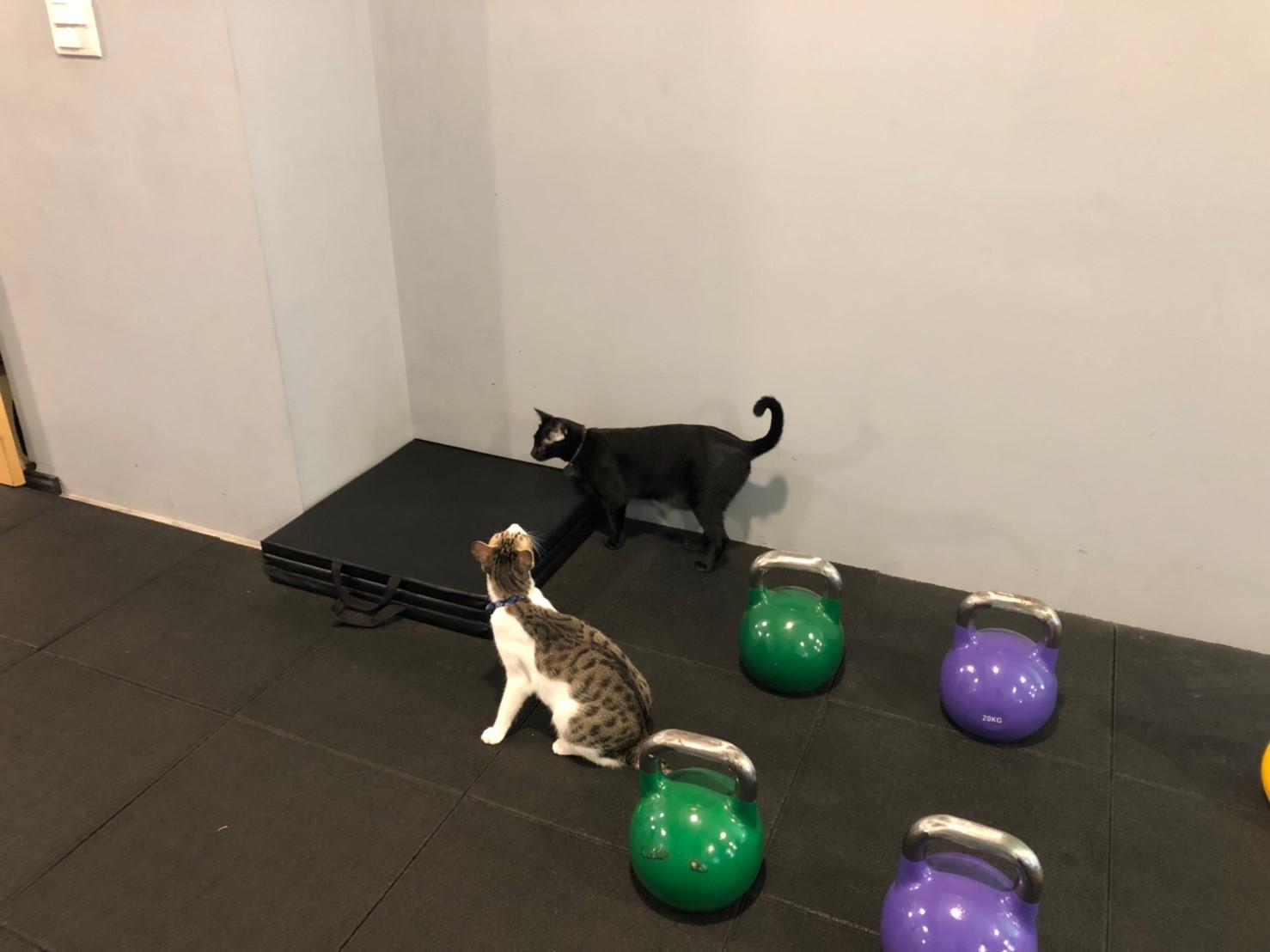 台南東區健身房