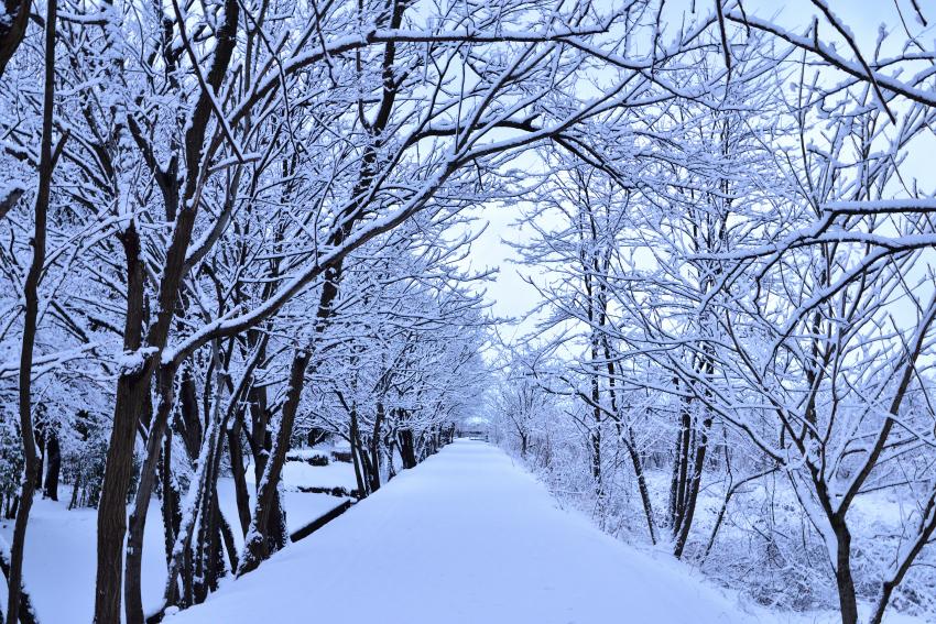 金沢市 冬景色