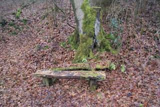 Eine alte, mit Moos bewachsene, verzogene und gerissene Holzbank steht unter einem Baum