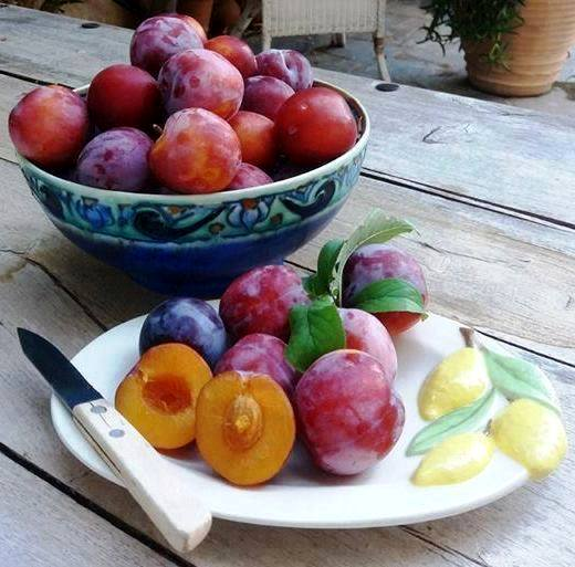 Plums from our tree