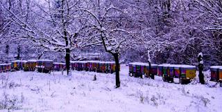 منحل وسط الثلوج