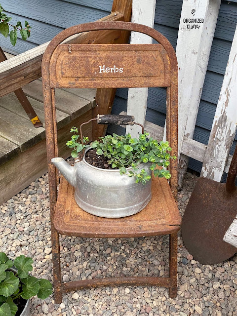Photo of rusty chair with a tea kettle planted with ornamental orgegano