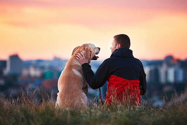 Tips on How to Get Your Dog To Like You?: The Easiest Way To Get a Dog To Like You