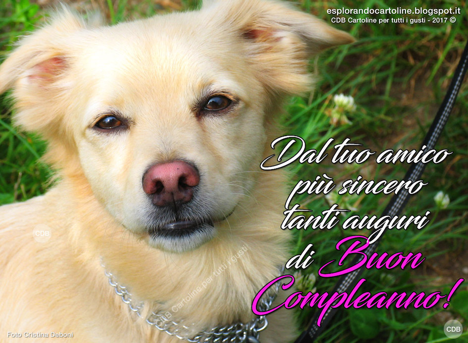 Cartoline Buon Compleanno Cani Images