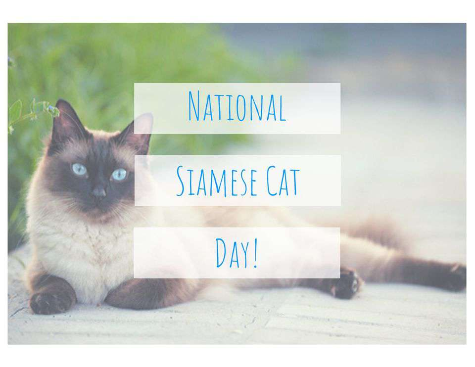 National Siamese Cat Day Wishes For Facebook