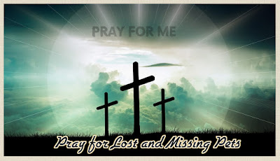 Pray for Lost and Missing Pets