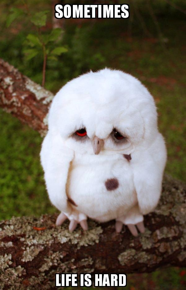 Sad Owl: Sometimes ... Life is Hard
