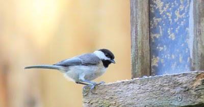Feeding winter birds in North Carolina - What birds are in ...