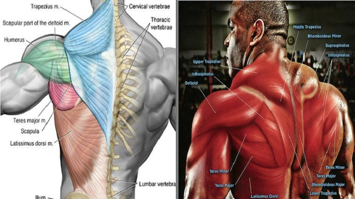 Best 30 Minute Workout To Build An Incredible Back
