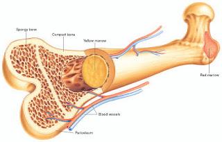 Obat Patah Tulang Remuk Agar Kembali Utuh