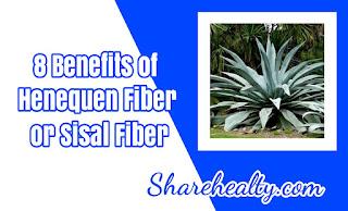 Benefits of Henequen Fiber