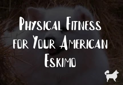 Physical Fitness for Your American Eskimo