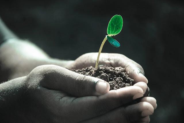 Make Organic Fertilizer From Waste