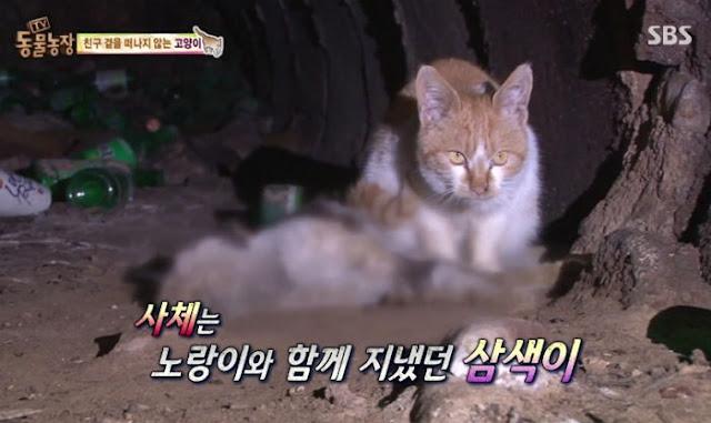 Video kucing cium, urut dan enggan tinggalkan bangkai rakannya biarpun sudah sebulan tidak bernyawa
