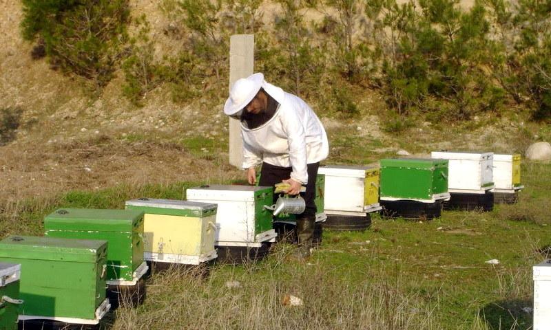 «Πικρό» το μέλι για τους παραγωγούς στη Θράκη
