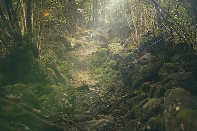 tips tersesat di hutan