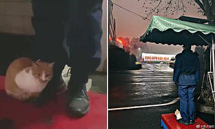Cat accompanies firefighters to stand guard every day after they raised the former stray for three years