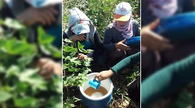 Tarım işçilerine reva görülen içme suyu!