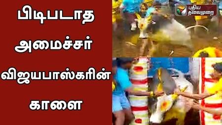 Minister Vijayabaskar's Bull in the battle of Alanganallur Jallikattu event