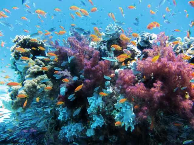 Fishes under ocean