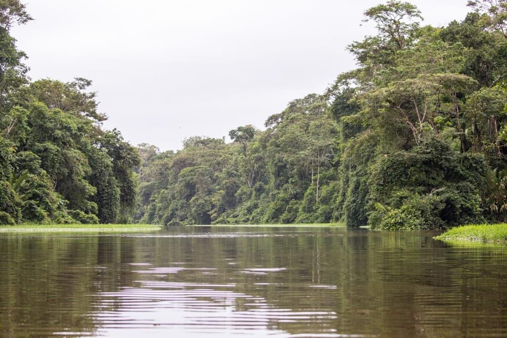 Canales del Parque Nacional Tortuguero