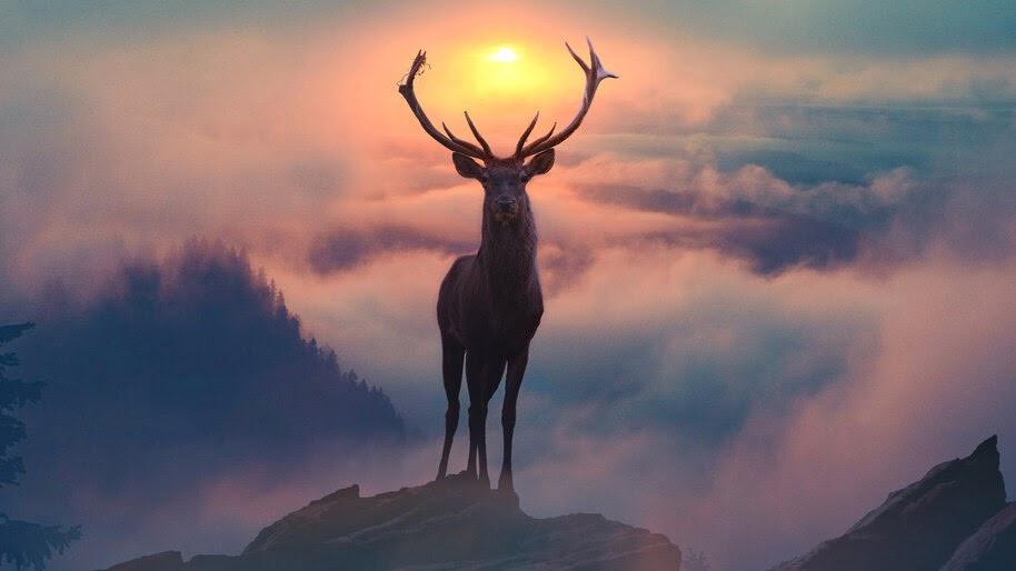 Reindeer, Mountain, Fog, Scenery, Photograpy, 4K, #4.2067