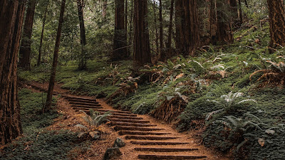 Wallpaper HD Stairs Path In the Forest