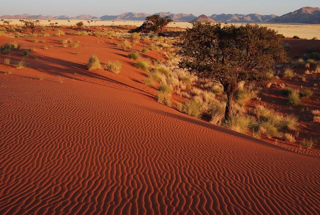 la savane du Namib
