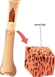 kemik iliğinin bağışıklık sistemine etkisi