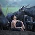 Kesian Mowgli, kerbau kesayangan pun mati