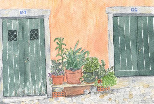Des plantes et du soleil