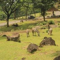 Taman safari prigen - Tempat Wisata Study Tour Malang Batu