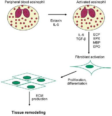 小兒過敏專科 鄭堪弘醫師: ECP ; Eosinophil Cationic Protein