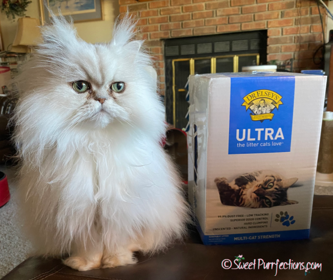 silver shaded Persian cat, Brulee, beside the Dr. Elsey's Ultra Litter