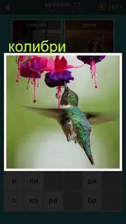 колибри подлетела к цветочку и клювом внутрь него 667 слов 15 уровень