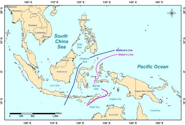 proses-terbentuknya-kepulauan-Indonesia