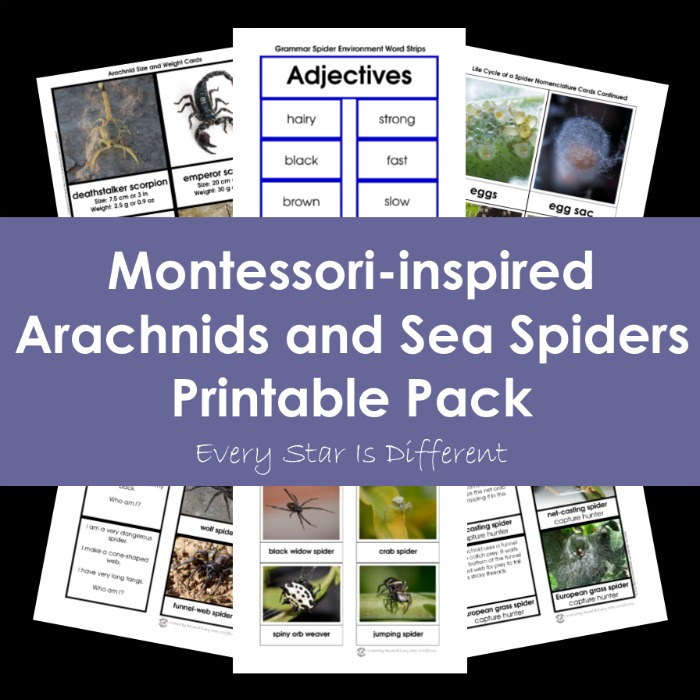 Montessori-inspired Arachnids and Sea Spiders Printable Pack Bundle